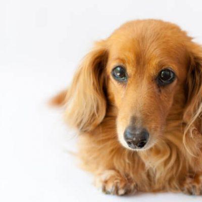 神戸市で愛犬が亡くなる